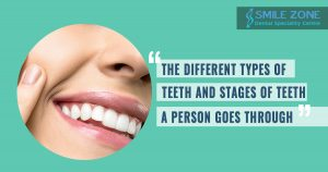 What are the different types of teeth and stages of teeth that a person goes through